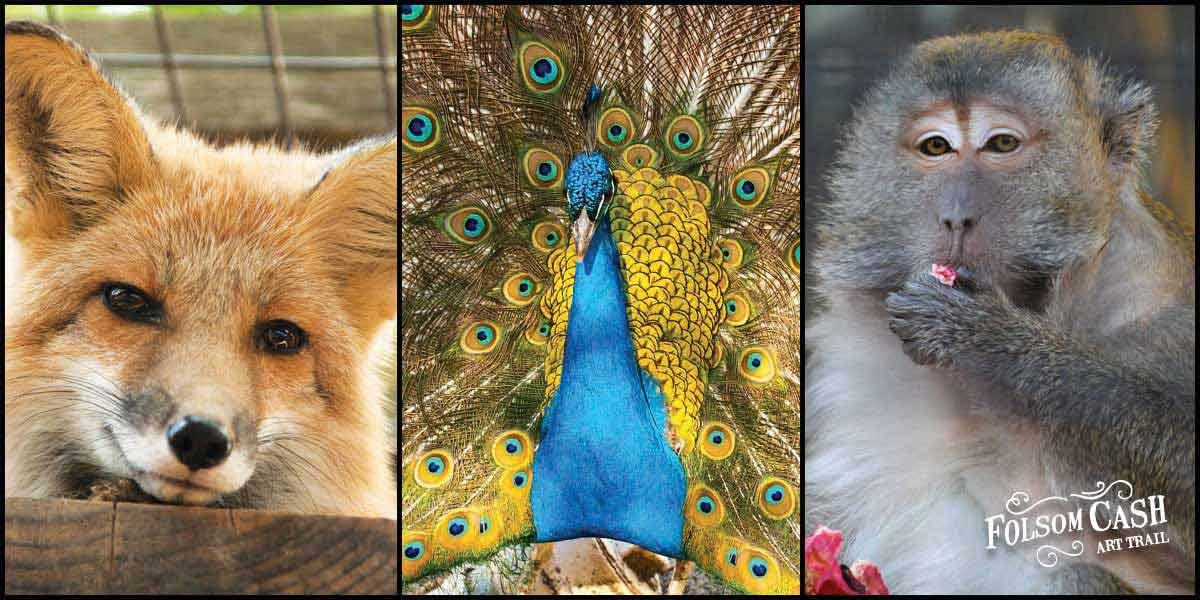 Folsom Zoo Animals